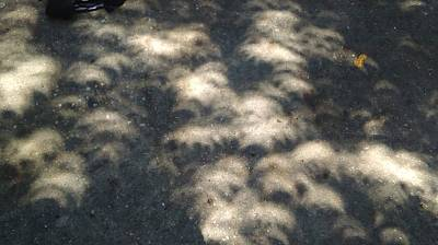 Photograph -  Solar Eclipse 2017 Shadows On A Street In New Orleans by Michael Hoard