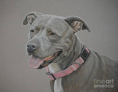 Drawing - American Staffordshire Terrier by Charlotte Yealey