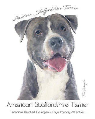 American Staffordshire Terrier Poster 2 Art Print by Tim Wemple