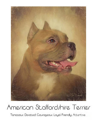 Staffordshire Bull Terrier Digital Art - American Staffordshire Terrier Poster by Tim Wemple