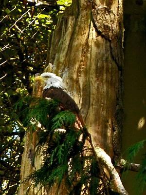 Photograph - American Symbol by Gary Wonning