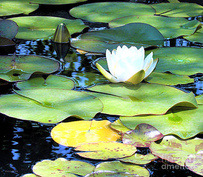 American Water Lilies Four Art Print by J Jaiam