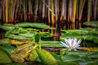 Photograph - American Water Lily And Green Frog by LeeAnn McLaneGoetz McLaneGoetzStudioLLCcom