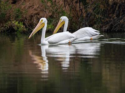 Photograph - American White Pelican 5836-113017-1cr by Tam Ryan