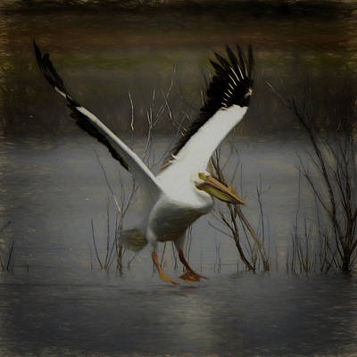 Digital Art - American White Pelican Da Square by Ernie Echols
