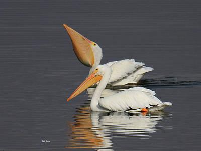 Photograph - American White Pelicans by Bob Zeller