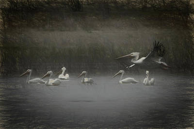 Digital Art - American White Pelicans Da by Ernie Echols