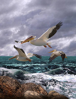 Painting - American White Pelicans by IM Spadecaller