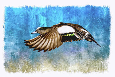 John Williams Digital Art - American Widgeon Drake by John Williams