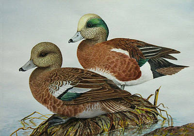 Waterfowl Painting - American Widgeons by Elaine Booth-Kallweit