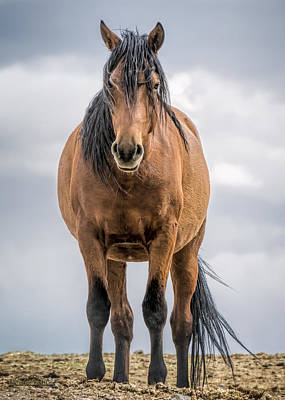 Photograph - American Wild Stallion by LeeAnn McLaneGoetz McLaneGoetzStudioLLCcom