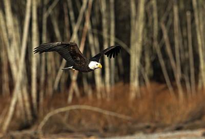 Photograph - America's Finest by Shari Sommerfeld