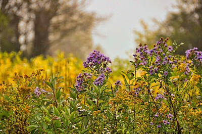 Amethyst And Golden Rod Art Print by JAMART Photography