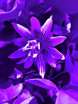 Photograph - Amethyst Passion Flower 4 by Aimee L Maher Photography and Art Visit ALMGallerydotcom