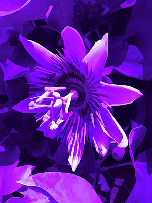 Photograph - Amethyst Passion Flower 5 by Aimee L Maher ALM GALLERY