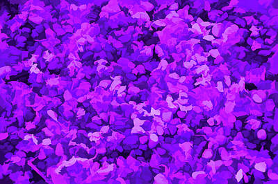 Mellow Yellow - Amethyst Petals on Stones by Aimee L Maher ALM GALLERY