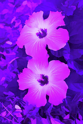 Photograph - Amethyst Pink Hibiscus Blooms Vertical by Aimee L Maher Photography and Art Visit ALMGallerydotcom