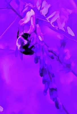 Photograph - Amethyst Pollination by Aimee L Maher Photography and Art Visit ALMGallerydotcom