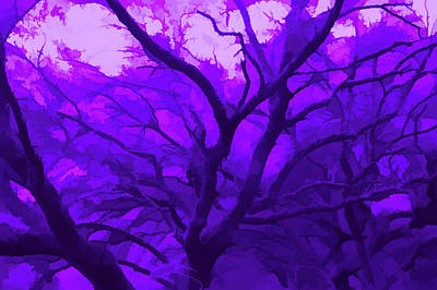 Photograph - Amethyst Reaching Out by Aimee L Maher Photography and Art Visit ALMGallerydotcom