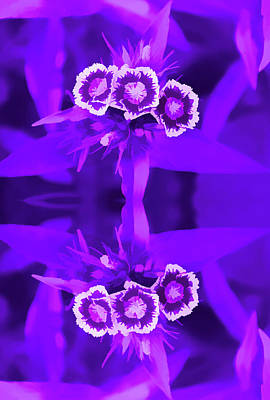 Photograph - Amethyst Reflections Of A Summer Bouquet by Aimee L Maher ALM GALLERY