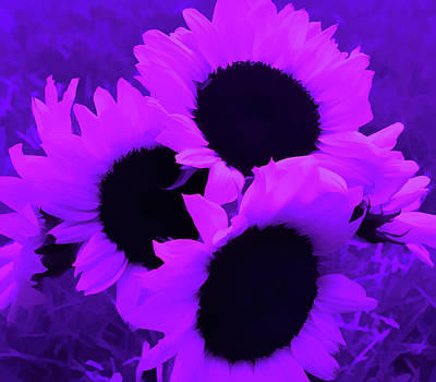 Photograph - Amethyst Sunflower Bouquet by Aimee L Maher Photography and Art Visit ALMGallerydotcom