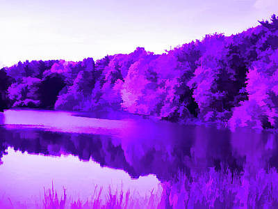 Photograph - Amethystt Reflecting Trees by Aimee L Maher Photography and Art Visit ALMGallerydotcom