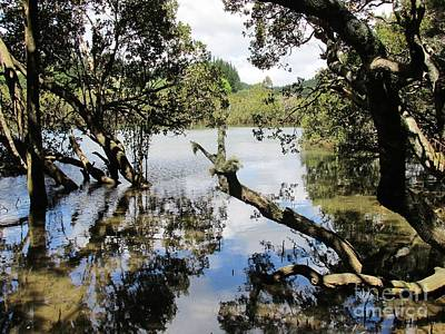 Photograph - Amidst The Mangroves by Dianne  Connolly