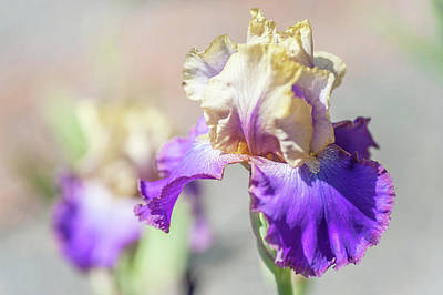 Photograph - Amigos Guitar 1. The Beauty Of Irises by Jenny Rainbow