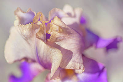 All You Need Is Love - Amigos Guitar Macro. The Beauty of Irises by Jenny Rainbow