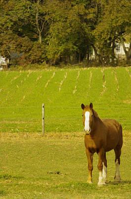 Photograph - Amish Beauty Senses Camera by Susan Maxwell Schmidt