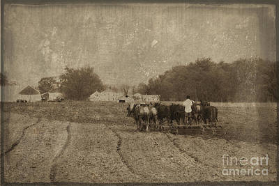 Photograph - Amish Boy Working The Field by David Arment
