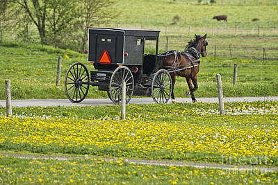 Amish Photograph - Amish Buggy And Field Of Dandelions by David Arment