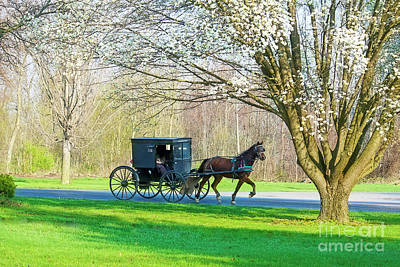 Photograph - Amish Buggy And Flowering Tree by David Arment