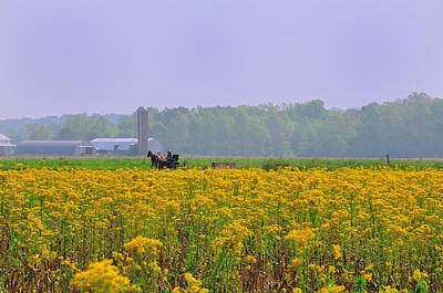 Amish Photograph - Amish Buggy And Yellow Field by David Arment