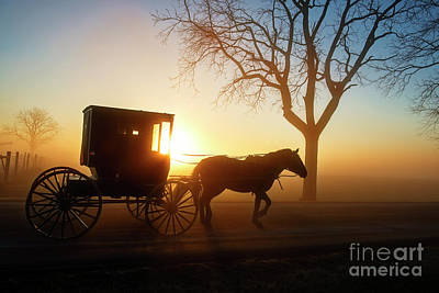 Photograph - Amish Buggy At Dawn Old Horse by David Arment