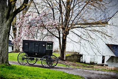 Photograph - Amish Buggy Flowering Tree by David Arment