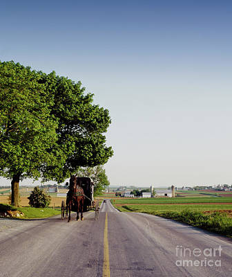 Photograph - Amish Buggy - To License For Professional Use Visit Granger.com by Granger