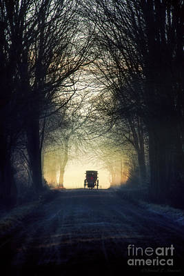 Photograph - Amish Buggy In Trees by David Arment