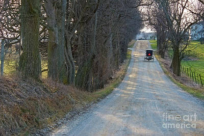 Photograph - Amish Buggy Tree Lined Road At Dusk by David Arment