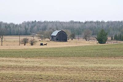 Photograph - Amish Country 0754 by Michael Peychich