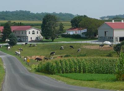 Amish Country Road Art Print
