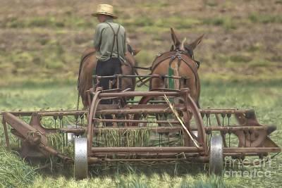 Amish Country Tour 105a Original by Randy Matthews