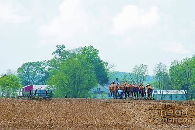 Photograph - Amish Farmer And Horses In Field by David Arment