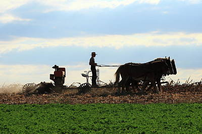 Photograph - Amish Farmer by Lou Ford