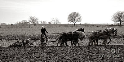 Amish Photograph - Amish Farming by Olivier Le Queinec