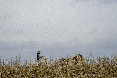 Photograph - Amish Harvest by Dan Traun