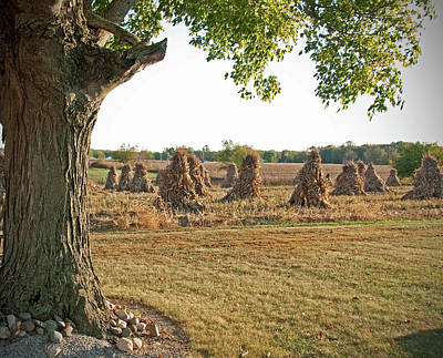 Amish Photograph - Amish Harvest by David Arment