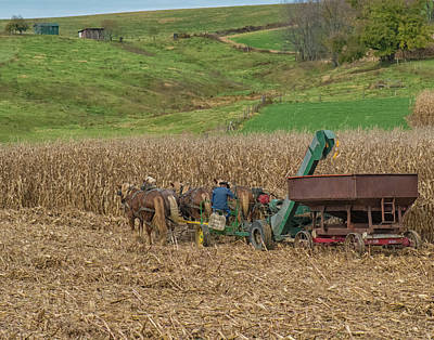 Photograph - Amish Harvest In Ohio  by Richard Kopchock