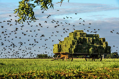 Photograph - Hay Wagon At Golden Hour by Tana Reiff