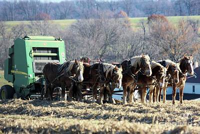 Photograph - Amish Haymaker In Lancaster County, Pennsylvania by Polly Peacock